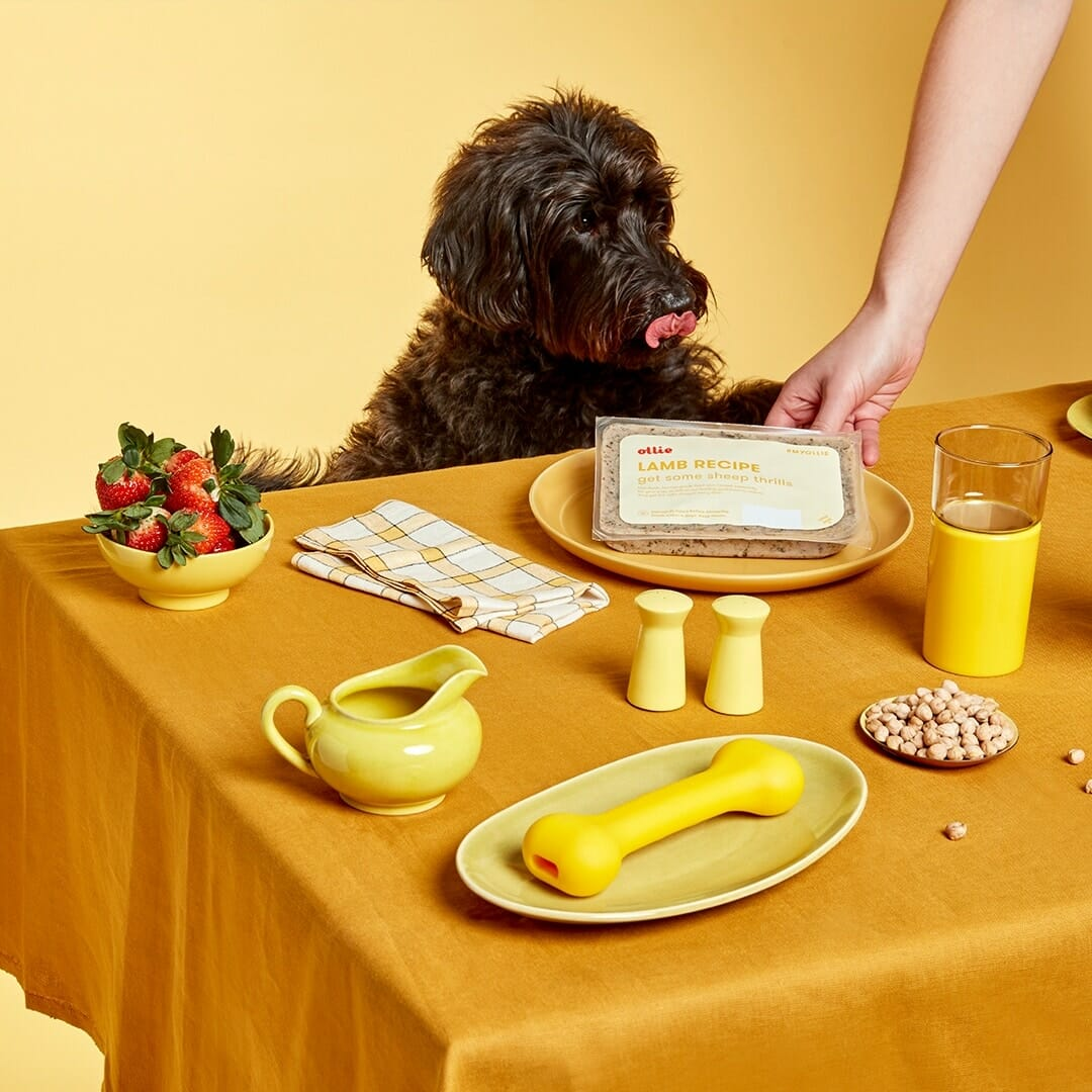 Ollie vs Pet Plate vs NomNomNow: Comparing Fresh Dog Food Subscriptions