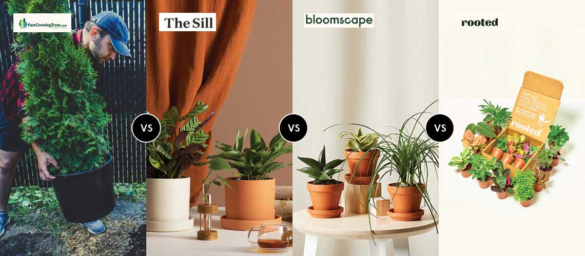 Bloomscape-vs-The-Sill-vs-Rooted